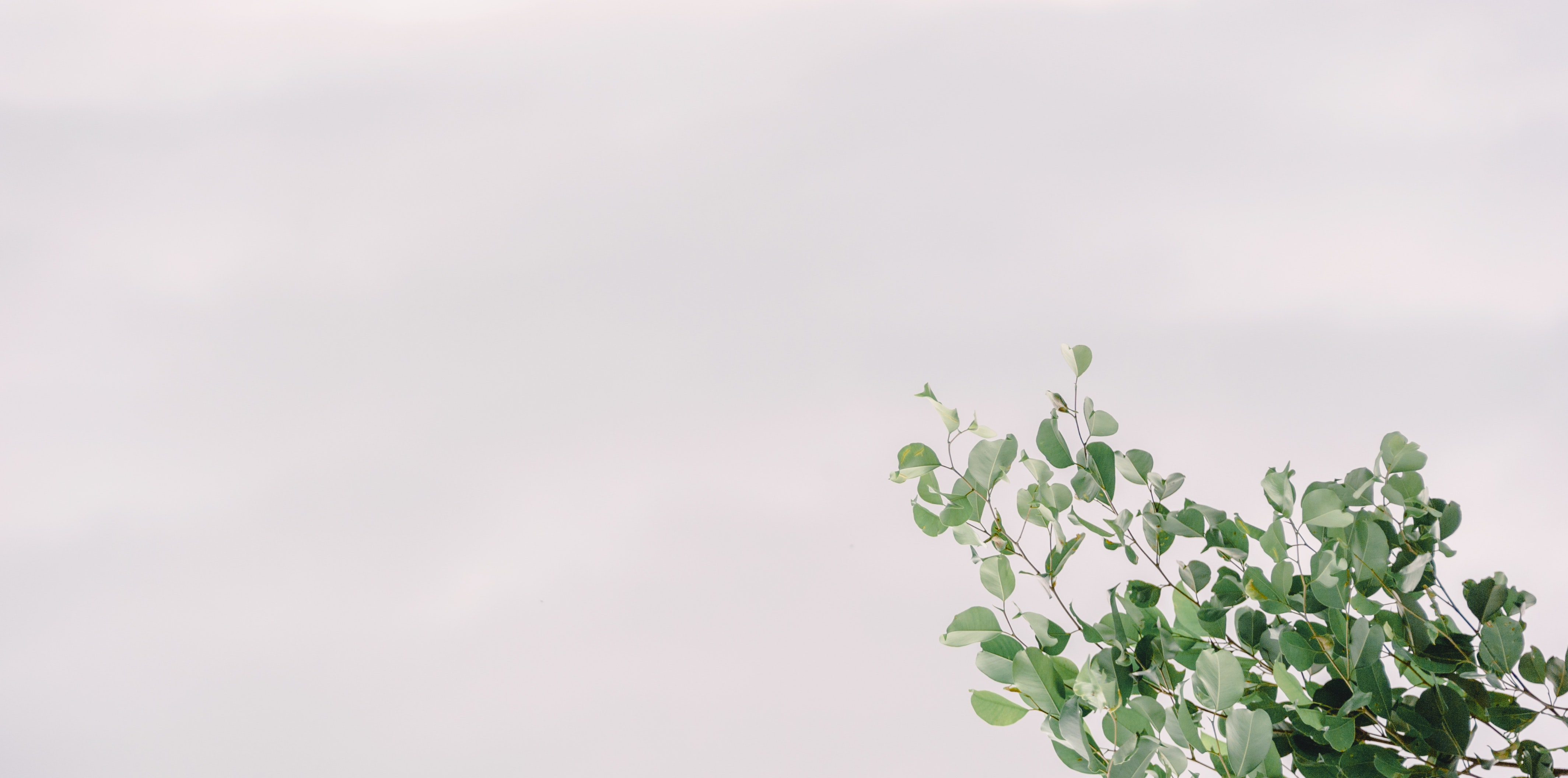 branch-color-green-1353939